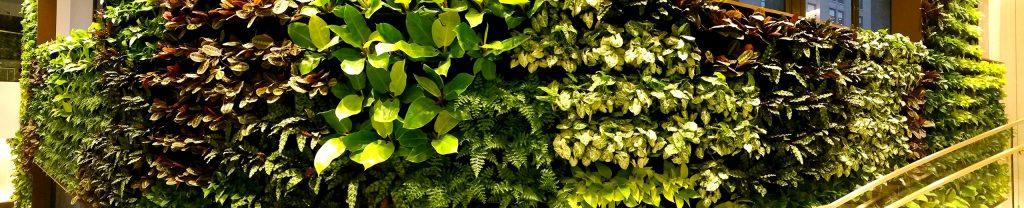 Mur végétal en plantes naturelles